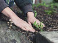 Brakuje Ci pomysłu na aranżację małego ogrodu? Voucher na profesjonalny projekt rozwiąże ten problem