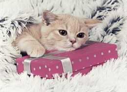 Gdzie położyć prezent niespodziankę?
