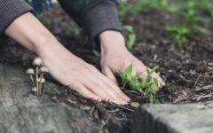 aranżacja małego ogrodu
