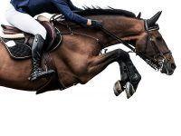 Nauka jazdy konnej – kreatywny prezent na dzień dziecka nie tylko dla dziewczynki