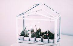 Zobacz jak urządzić ogród zimowy