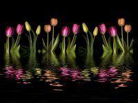 Chcesz, aby Twój ogród wyglądał pięknie nie tylko za dnia? Podaruj sobie i bliskim voucher na projekt oświetlenia ogrodu